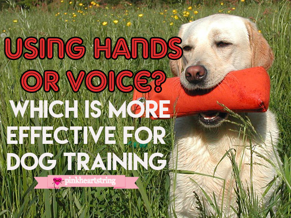 Using Hands or Voice- Which is More Effective for Dog Training