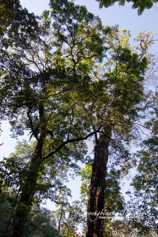 petungkriyono ecotourism pekalongan