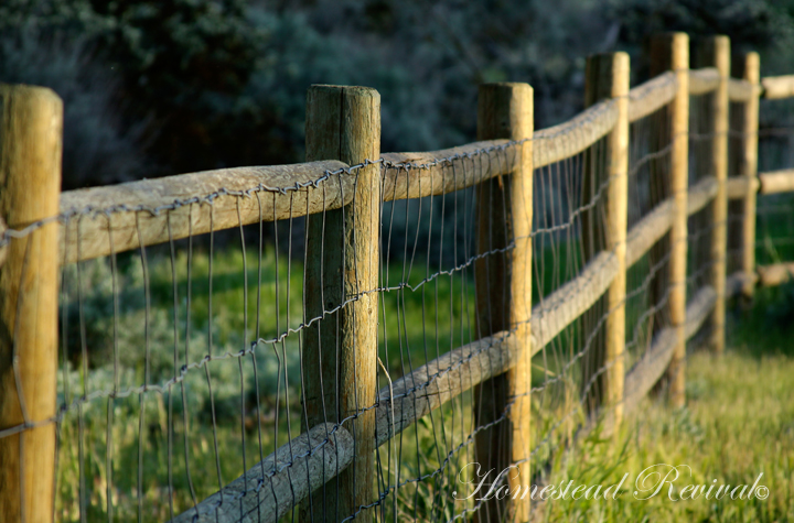 Homestead Revival: Goat Fencing