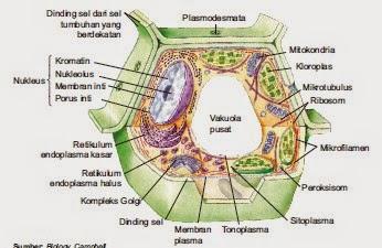 44+ Gambar Struktur Sel Eukariotik Pada Hewan Dan Tumbuhan HD