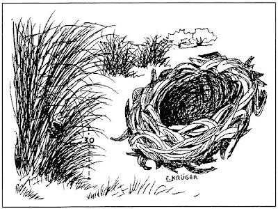 Arañero cara negra Geothlypis aequinoctialis
