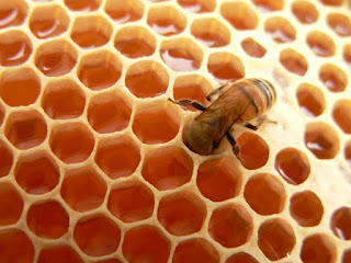Honey | Sweet Food Made by Bees | Genus Apis