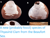 http://sciencythoughts.blogspot.co.uk/2015/01/a-new-probably-fossil-species-of.html