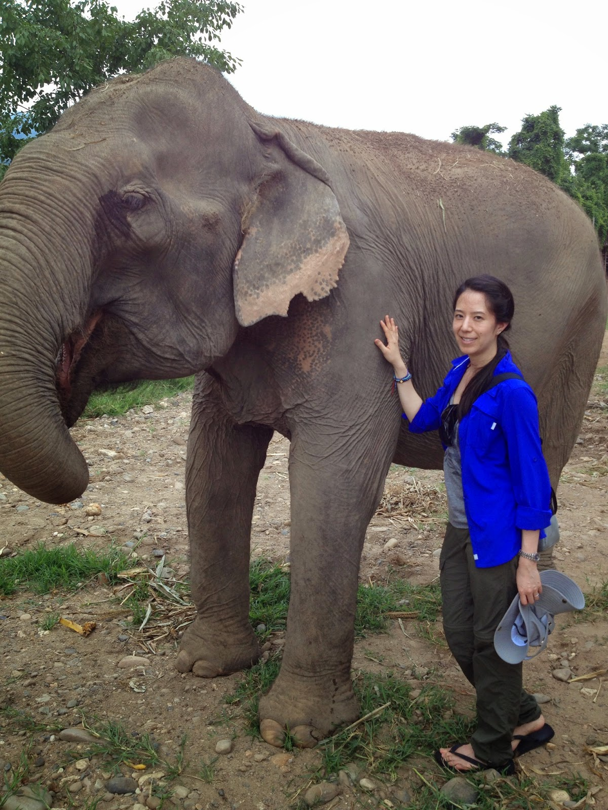 Chiang Mai - These elephants are so big!