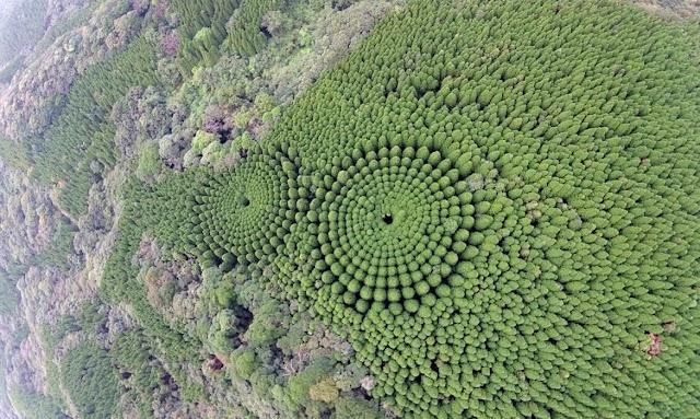 El bosque japones que encanta en Google Maps
