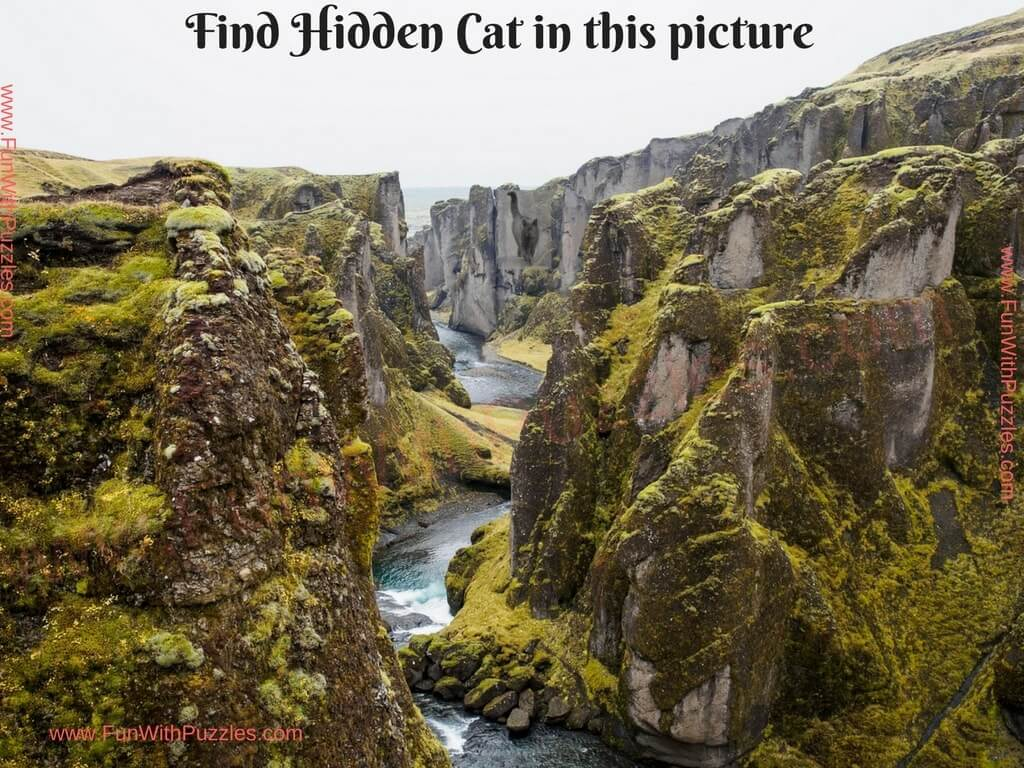 visibility test find the hidden cat picture puzzles