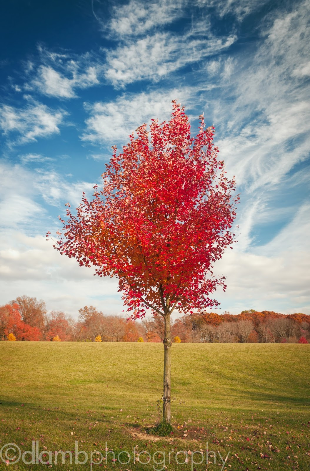 http://david-lamb.artistwebsites.com/featured/single-lone-autumn-tree-david-lamb.html