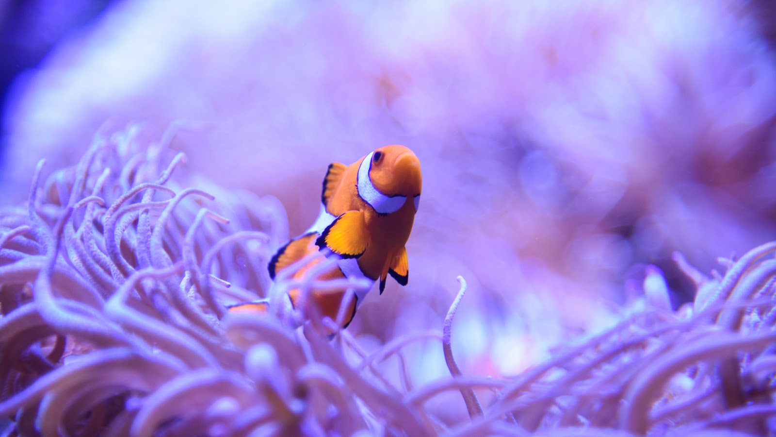 Deniz Altı Duvar Kağıtları | Underwater Wallpaper | 1080p HD Sualtı Duvar Kağıtları | Duvar ...