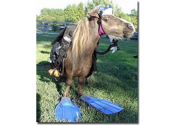 As fotos mais estranhas e inexplicáveis de todos os tempos - parte 2 - Cavalo com equipamento de mergulho