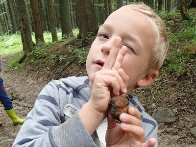 grzyby 2017, grzyby w lipcu, grzyby na Orawie