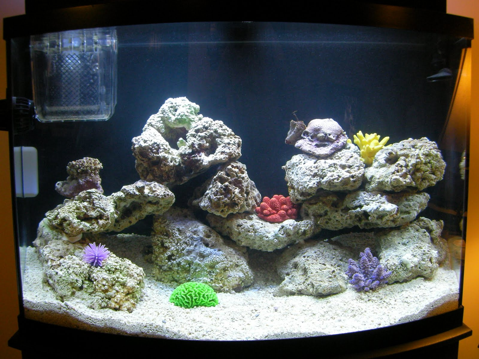 Saltwater fish tank nitrogen cycle nitrogencycle for Cycling a fish tank
