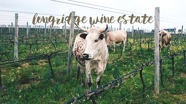 longridge wine estate, nguni cow