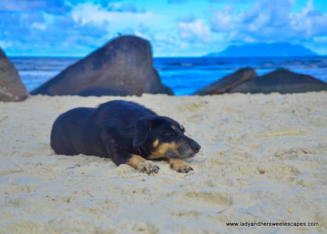 dog in Mahe Seychelles