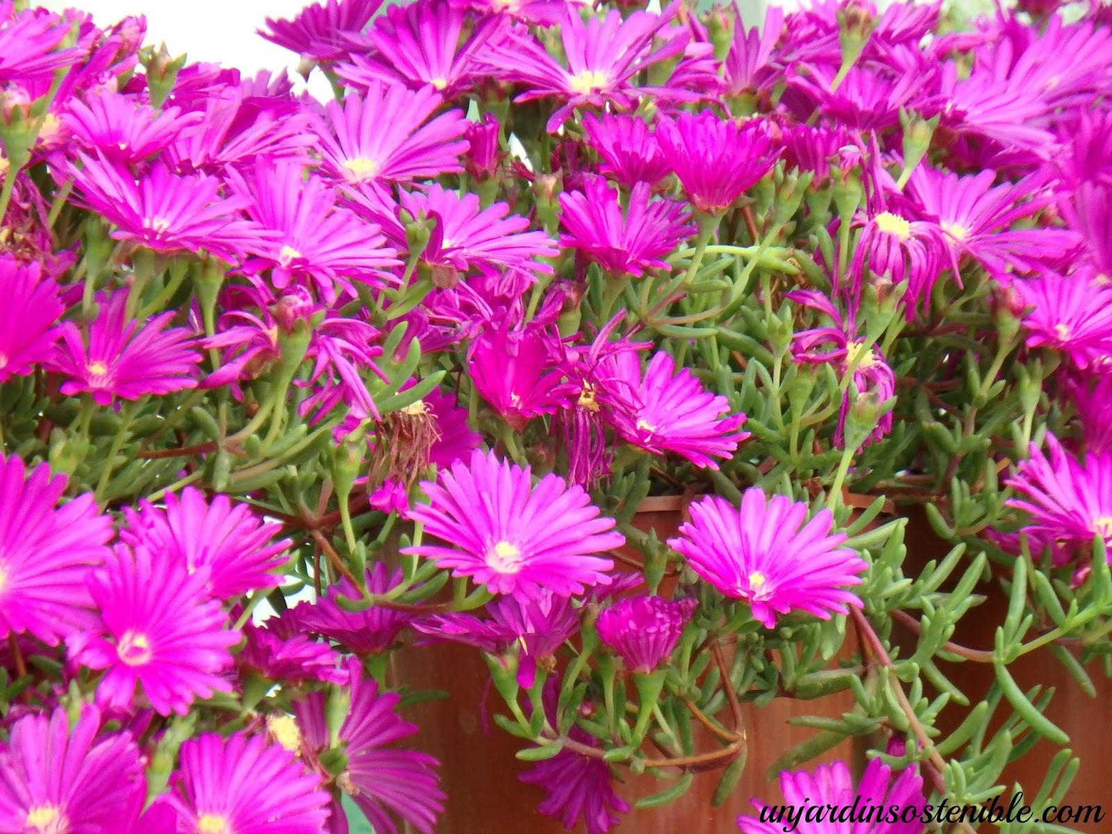 Plantas rastreras de sol imagen plantas rastreras de for Plantas exterior mucho sol