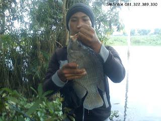 Master Umpan Ikan Nila Babon
