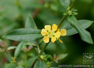 flora nativa quiebra arado
