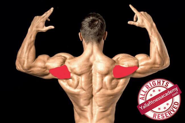 تشريح عضلة الكتف و كيفية إستهداف أجزائها