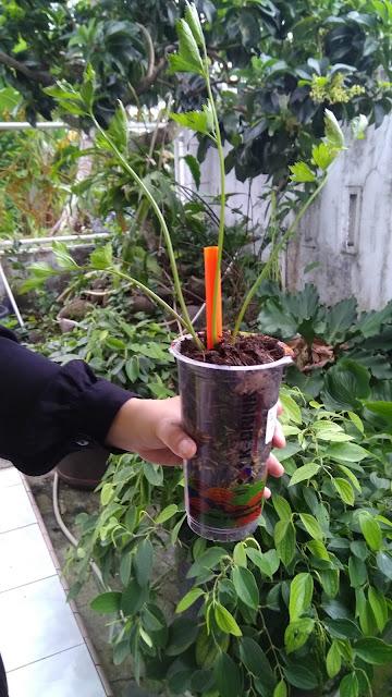 Plastik Bekas Untuk Pot Sayur