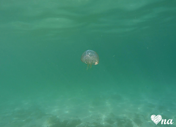 Pod Wodą - meduza