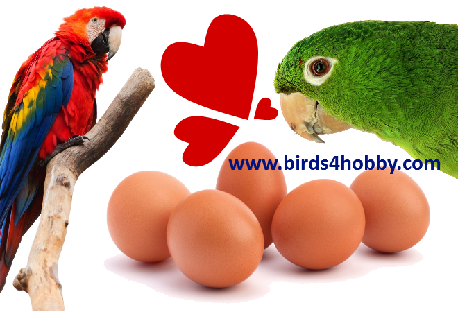 The importance of eggs in feeding pet birds