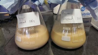 Homebrew Yeast Cropping