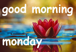 good morning monday image with flower
