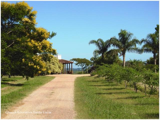 Camino de acceso a la Chacra - Chacra Educativa Santa Lucía