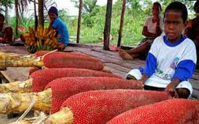 Kekayaan Papua Barat Yang Tak Ternilai Harganya 7 KEKAYAAN PAPUA BARAT YANG TAK TERNILAI HARGANYA