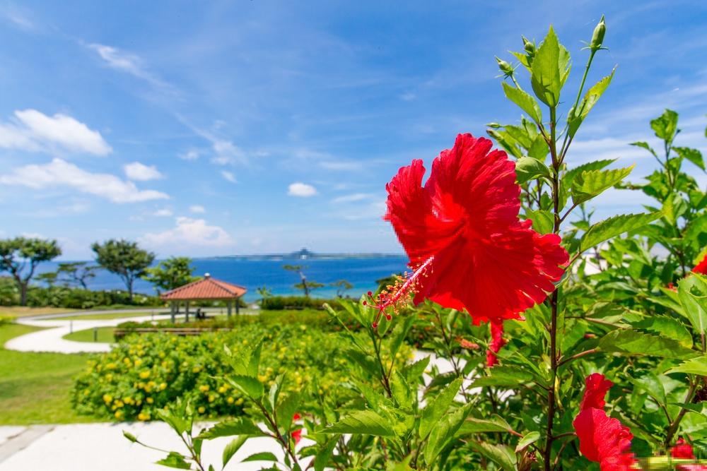 Lời khuyên hữu ích cho du lịch Nhật Bản vào tháng 6