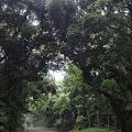林道,森林,明治神宮〈著作権フリー無料画像〉Free Stock Photos