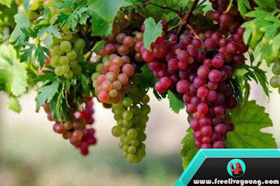12 Benefits of Wine Fruits For Body Health