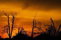 #4 dampak kerusakan flora dan fauna bagi kehidupan