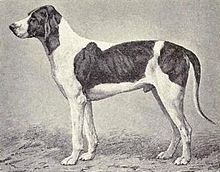 Billy dog-dogs-pets-dog breeds