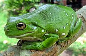 حقيقه علميه عن الضفادع True Frog