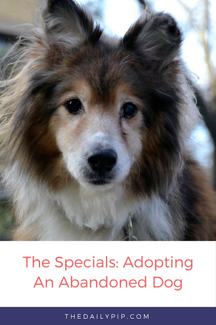 Rescuing, rehabilitating, and adopting an abandoned dog