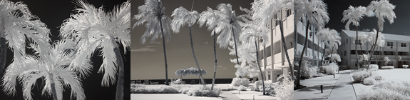 Infrared photographs of the HH property - copyright, Sheryl Lazenby