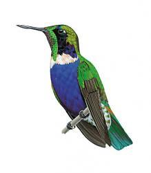 endemic birds of brazil