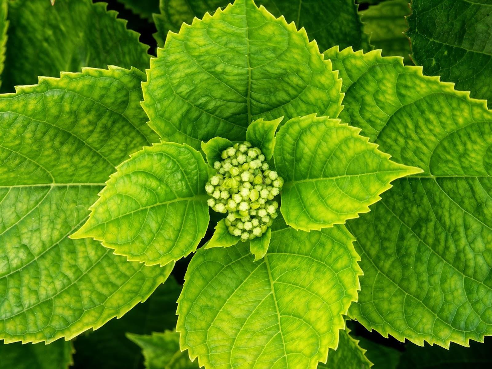 La fotos ntesis y la respiraci n en la planta biolog a for Plantas para estanques de agua fria