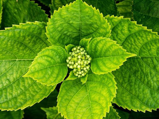 Fotosintesis respiracion planta