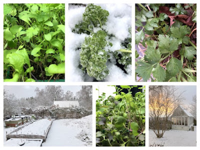 Decemberskörd - vinterodling