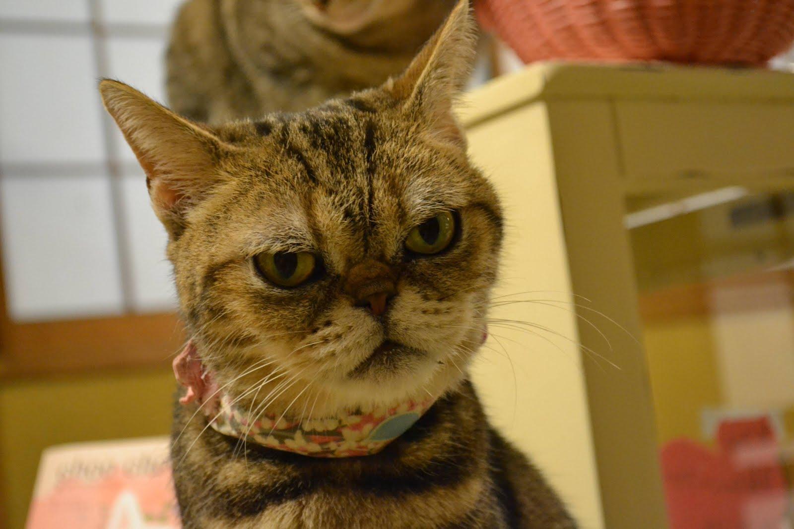 Funny Cats 36 Pics Amazing Creatures
