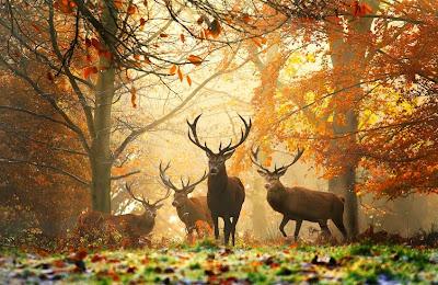 Самые красивые фото осени
