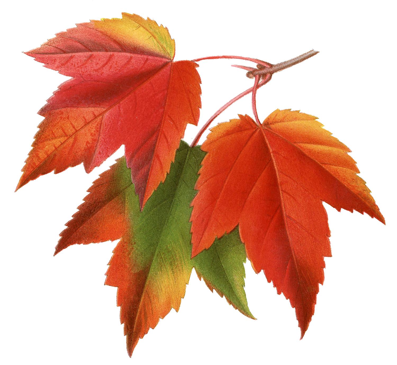 Maple Leaf Property Management Ottawa Scott Woodman Email
