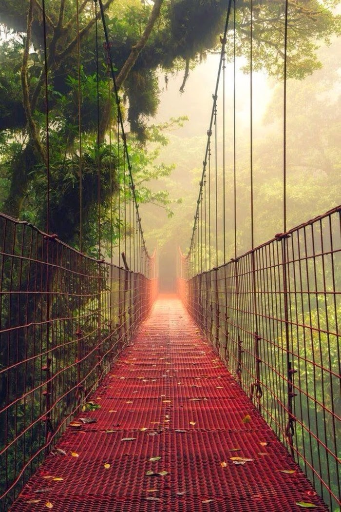 Fog Bridge Monteverdi Reserve, Costa Rica 10 Worlds Amazing And Beautiful Forests