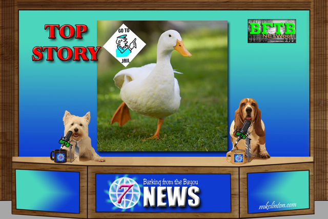 BFTB NETWoof News story of the arrest of four duck for loitering.