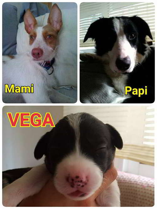 cachorros talla mediana 2