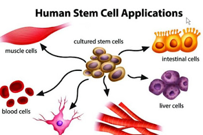 Human Stem Cell Applications
