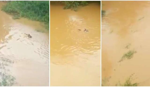 Homem morre afogado em rio enquanto testemunhas dão risada e filmam; imagens fortes