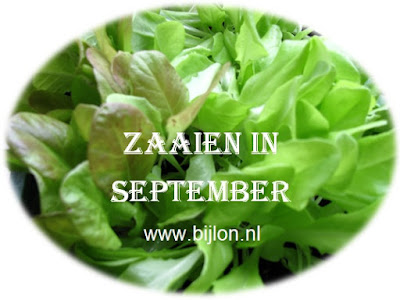 https://bijlon.blogspot.nl/2017/08/zaaien-in-september.html