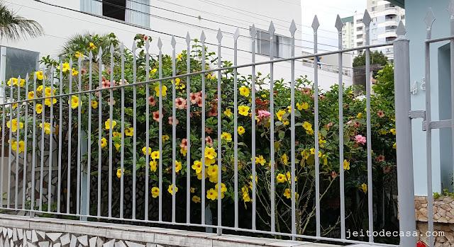 jardim- ou-quintal-com-alamandas